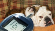 Dogs and cats can become diabetic