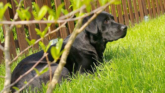 Some plants are toxic to dogs. Photo: simplyalex/Flickr