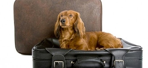 pet travel